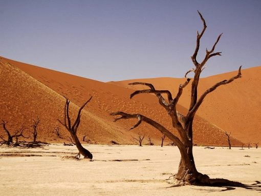 Namibia: 6 Day Safari