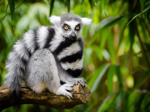 Classic Madagascar: 11 Day Island Holiday