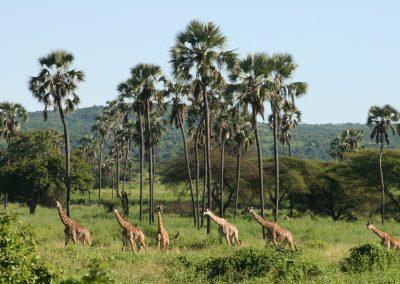 Tanzania Authentic Luxury