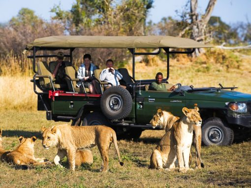 Botswana: 7 Day/ 6 Night Safari